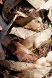Tronco de palmeira Foto de Stock