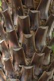 Tronco de palmeira Imagem de Stock Royalty Free