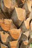 Tronco de palmeira podado fotos de stock royalty free
