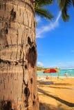 Tronco de palmera en la playa Imagenes de archivo