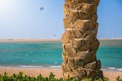 Tronco de palmera en la playa con la persona que practica surf de la cometa que salta arriba en el cielo fotos de archivo libres de regalías