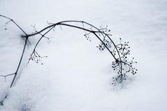 Tronco de plantas secadas en nieve foto de archivo libre de regalías