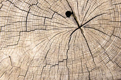 Tronco de árbol de madera del corte de la textura Foto de archivo