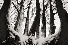 Tronco de árbol solitario en invierno, paisaje nevoso con nieve y la niebla, bosque de niebla en el backgroud, opinión del arte,  Fotografía de archivo