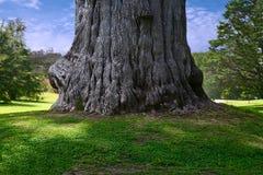 Tronco de árvore Fotos de Stock Royalty Free