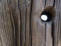 Tronco de ?rvore seco natural bonito com furo Fundo de madeira Textura de madeira imagens de stock royalty free
