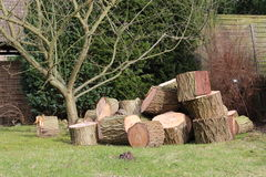 Tronco de árvore visto Imagem de Stock Royalty Free
