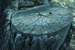 Tronco de uma árvore imagem de stock