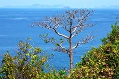 Tronco de uma árvore com o mar de Andaman no fundo Fotografia de Stock Royalty Free