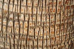 Tronco de uma palmeira Fotografia de Stock