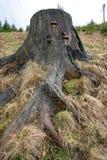 Tronco de un árbol Imagen de archivo libre de regalías
