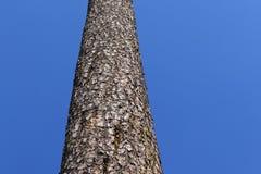 Tronco de un árbol Imagenes de archivo