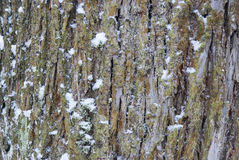 Tronco de un árbol en el bosque en la nieve imagen de archivo libre de regalías