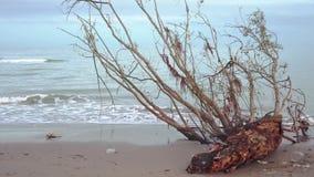Tronco de un árbol en la orilla del mar almacen de metraje de vídeo
