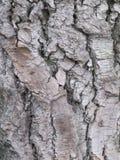 Tronco de un árbol viejo Imagenes de archivo