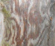 Tronco de un cierre del pino Imagenes de archivo