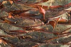 Tronco de un primer de la palmera Fotos de archivo