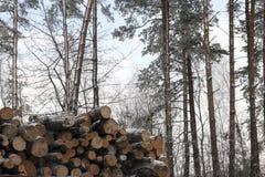 Tronco de una madera aserrada Fotos de archivo