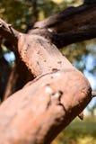 Tronco del árbol imagenes de archivo