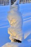 Tronco del árbol de abedul nevado Foto de archivo