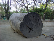 Tronco del árbol de Cutted Fotografía de archivo libre de regalías