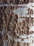 Tronco del árbol en día de primavera Imagen de archivo libre de regalías