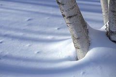 Tronco del abedul en la nieve Fotos de archivo libres de regalías