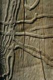 Tronco del eucalipto imagen de archivo libre de regalías