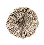 Tronco del taglio dell'albero con gli anelli di legno isolati fotografia stock libera da diritti