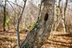 Tronco dell'albero con il foro, nel parco fotografie stock libere da diritti