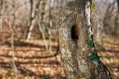 Tronco dell'albero con il foro, nel parco Immagini Stock