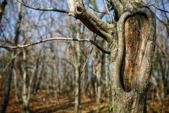 Tronco dell'albero con il foro, nel parco Immagine Stock
