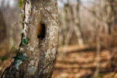 Tronco dell'albero con il foro, nel parco fotografia stock libera da diritti