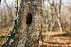 Tronco dell'albero con il foro, nel parco Immagine Stock Libera da Diritti
