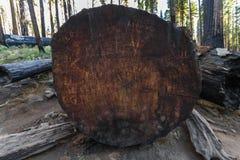 Tronco dell'albero di menzogne della sequoia in California fotografie stock libere da diritti