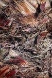 Tronco della palma immagini stock libere da diritti