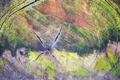 Tronco della quercia di autunno Immagini Stock