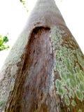 Tronco delle palme con il fungo Fotografie Stock Libere da Diritti