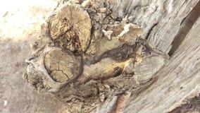Tronco di albero Immagini Stock Libere da Diritti