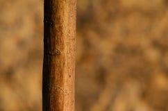 Tronco di albero Fotografie Stock Libere da Diritti