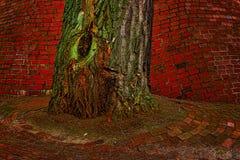 Tronco di albero Fotografie Stock