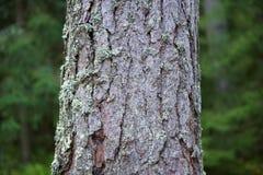 Tronco di albero Fotografia Stock Libera da Diritti