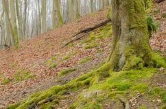 Tronco di albero 1 Immagine Stock