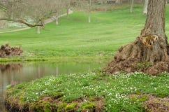 Tronco di albero 2 Immagine Stock Libera da Diritti