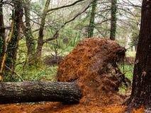 Tronco di albero Immagini Stock