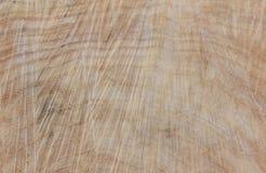 Tronco di albero abbattuto salice, fine su Legno di legno del fondo ruvido Fotografie Stock