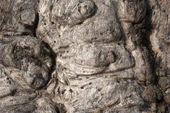Tronco di albero annodato fotografia stock