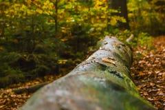 Tronco di albero in autunno Fotografie Stock Libere da Diritti