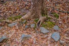 Tronco di albero in autunno lungo la traccia fotografie stock