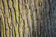 Tronco di albero background_2 Fotografie Stock Libere da Diritti